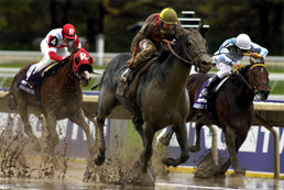 2007 2005 Amp 2001 Breeders Cup Photos By Equine Photo Art